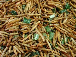 larvas.jpg